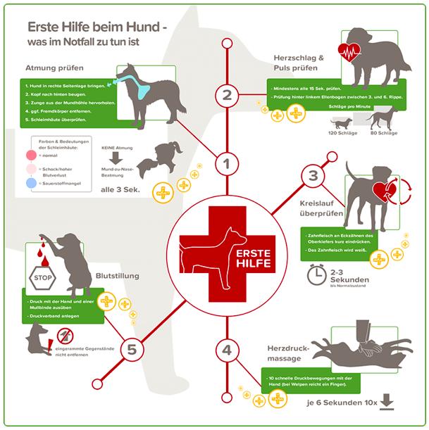 erste-hilfe-hund